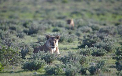 Visit Breathtaking Landscapes In Namibia